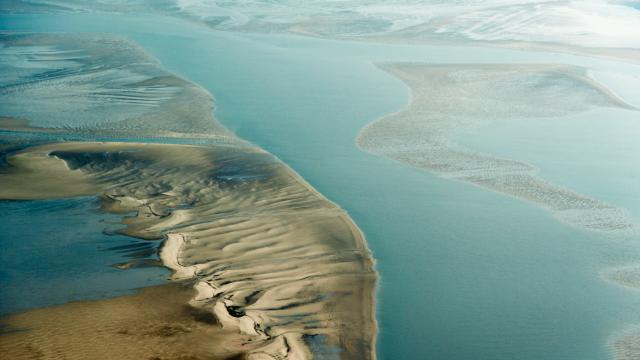 Ваттове море: що це і чому Google присвятив йому свій дудл