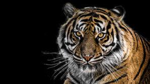 Год какого животного 2022